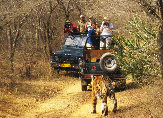 wilderness with jeep safari